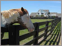 If You Are Someone Who Enjoyed The TV Show U201cDallas,u201d Your Tour Of Southfork  Ranch Will Be A Memorable One. Come See The Where The Ewing Family Called  U201chomeu201d ...